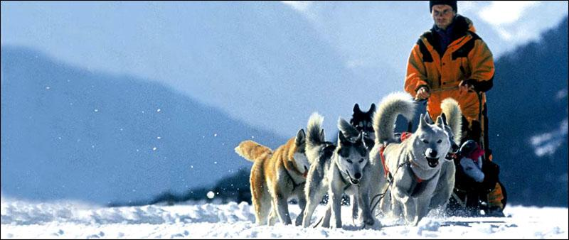 Courchevel mushing 1