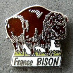 France bison