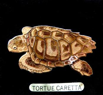 Jys tortue caretta