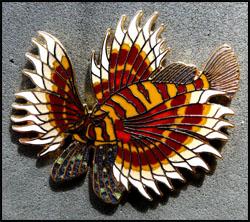 Pterois volitans jys