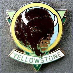 Yellowstone buffalo 251
