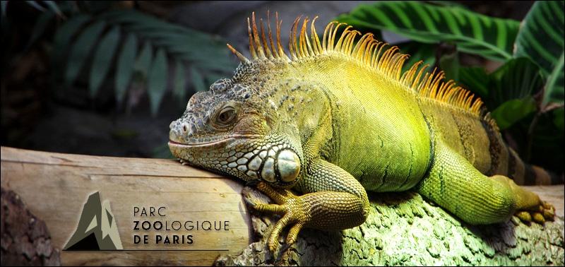 Zoo paris accueil
